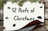 12 Pests of Christmas Image