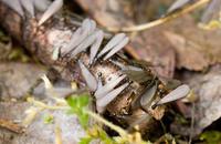 Subterranean Termite Season Already? Image