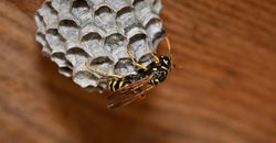 How Wasps Can Wreak Havoc on Marysville Businesses This Summer Image